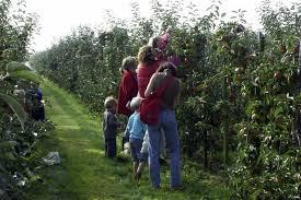 Fruitbedrijf de Woerdt
